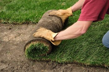 laying winter sod